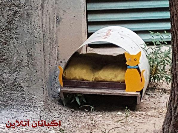 ساخت پناهگاه های کوچک برای حیوانات در شهرک اکباتان 2