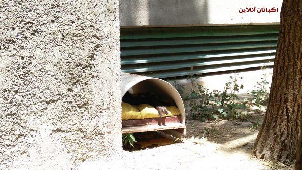 ساخت پناهگاه های کوچک برای حیوانات در شهرک اکباتان 5